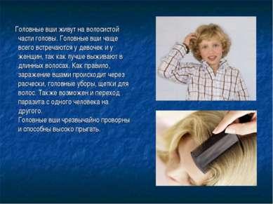 Головные вши живут на волосистой части головы. Головные вши чаще всего встреч...