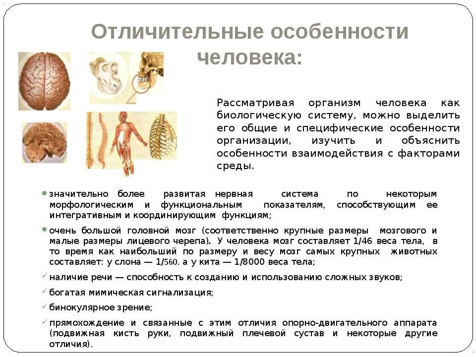 Отличительные особенности человека: значительно более развитая нервная систем...