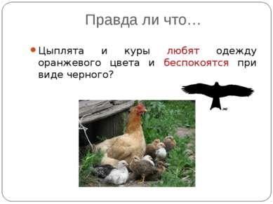 Правда ли что… Цыплята и куры любят одежду оранжевого цвета и беспокоятся при...