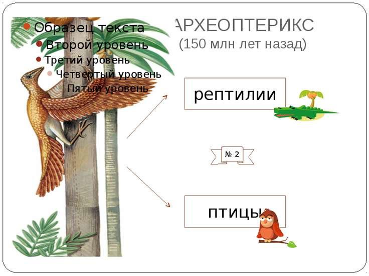АРХЕОПТЕРИКС (150 млн лет назад) птицы рептилии № 2 Чешуи на задних ногах, ор...