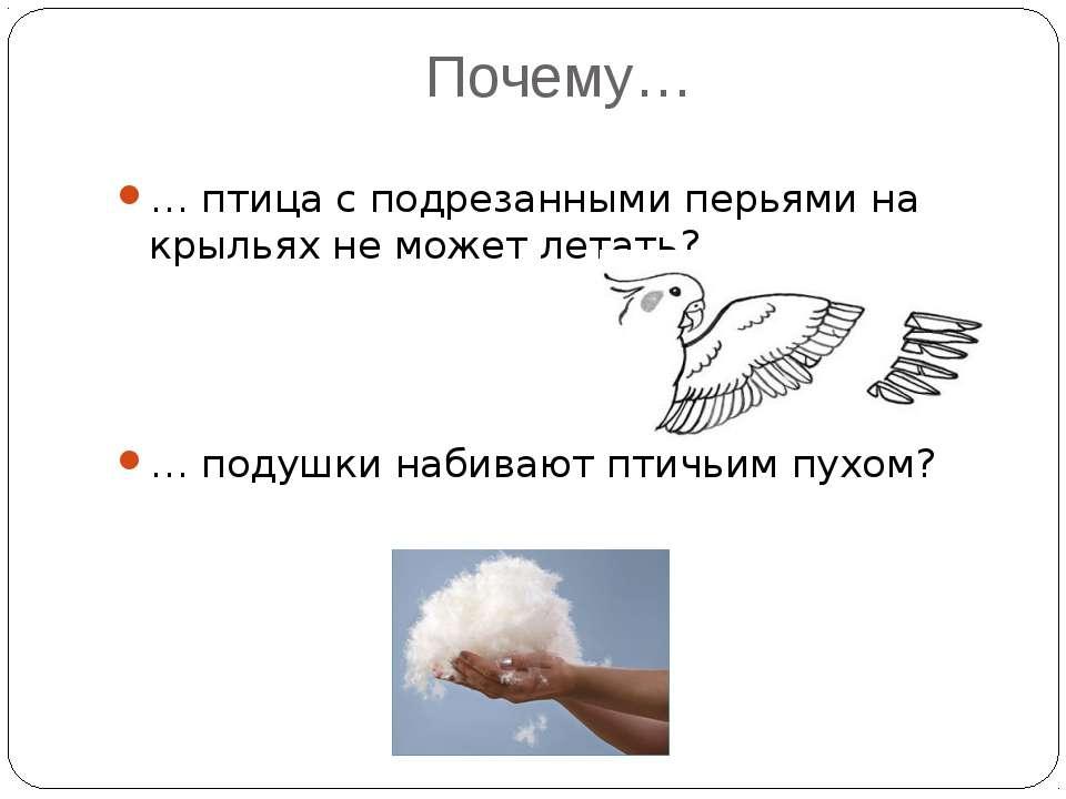 Почему… … птица с подрезанными перьями на крыльях не может летать? … подушки ...