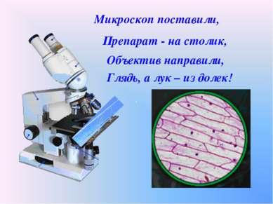 Микроскоп поставили, Препарат - на столик, Объектив направили, Глядь, а лук –...