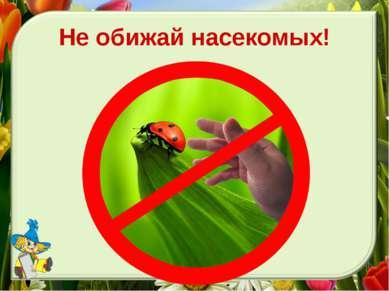 Не обижай насекомых!