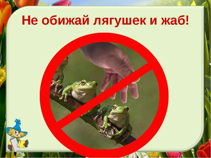Не обижай лягушек и жаб!