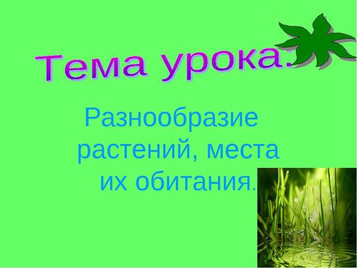 Разнообразие растений, места их обитания.
