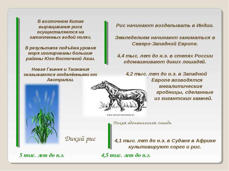 5 тыс. лет до н.э. 4,5 тыс. лет до н.э. В восточном Китае выращивание риса ос...