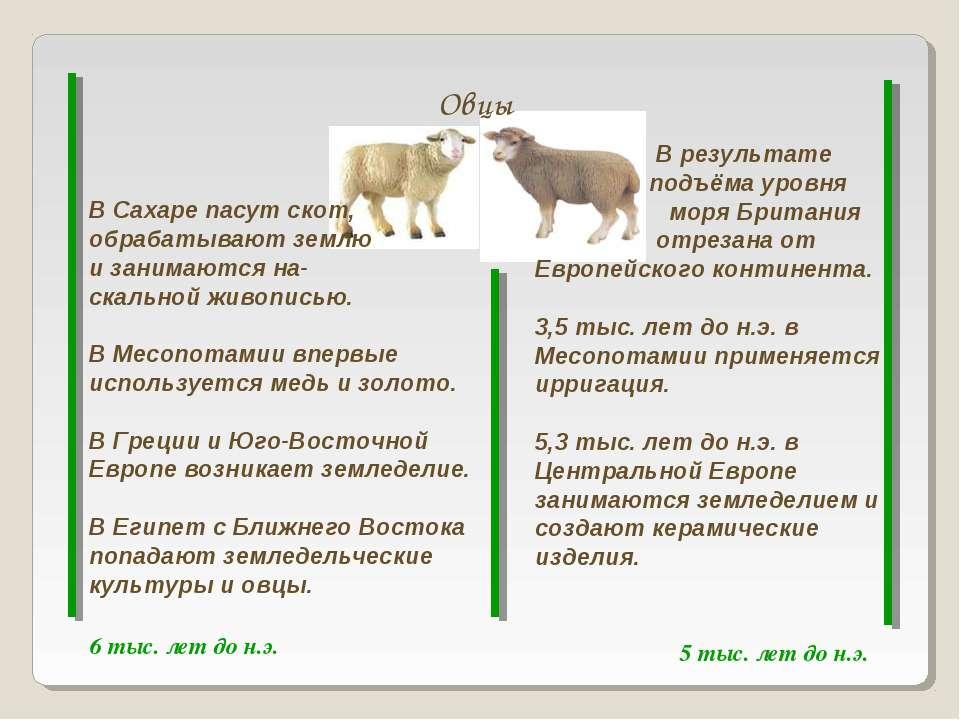 Овцы 6 тыс. лет до н.э. 5 тыс. лет до н.э. В Сахаре пасут скот, обрабатывают ...
