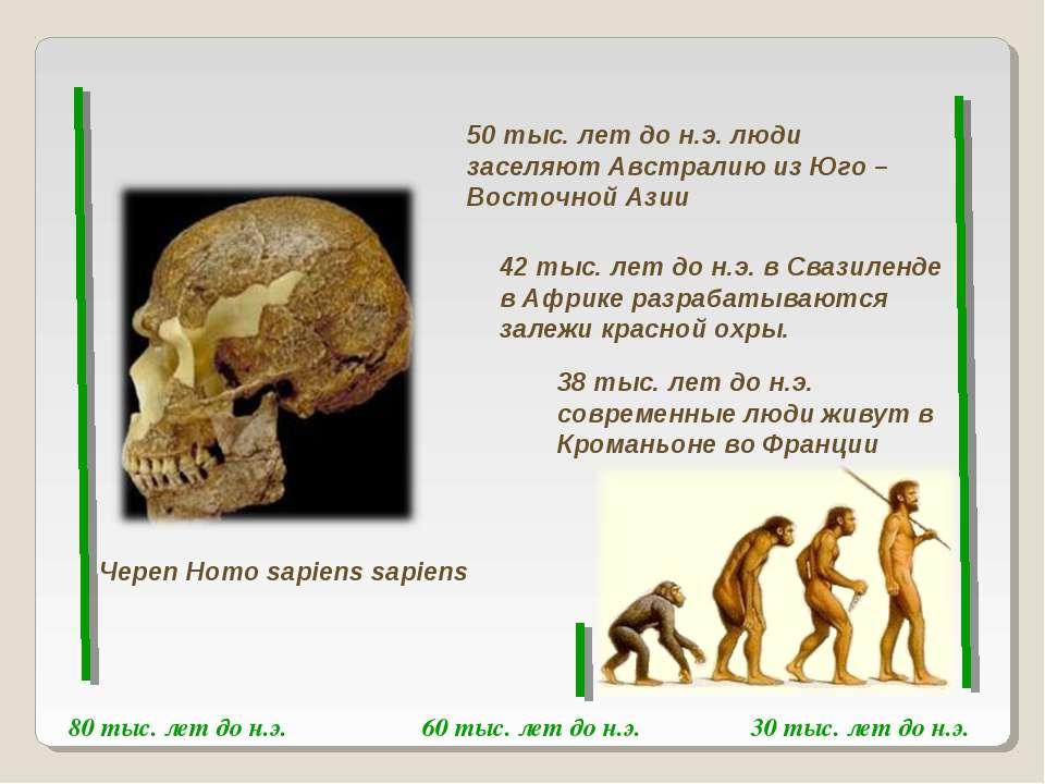60 тыс. лет до н.э. 80 тыс. лет до н.э. 30 тыс. лет до н.э. Череп Homo sapien...