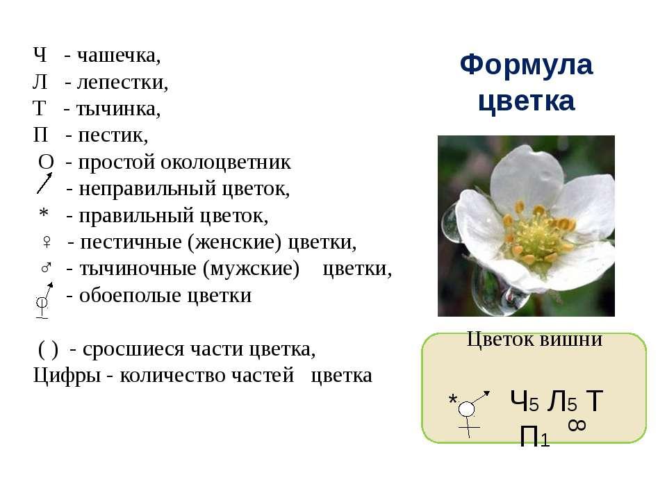 Лабораторная работа строение цветка яблони биология 6 класс