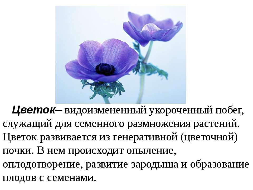 Цветок– видоизмененный укороченный побег, служащий для семенного размножения ...