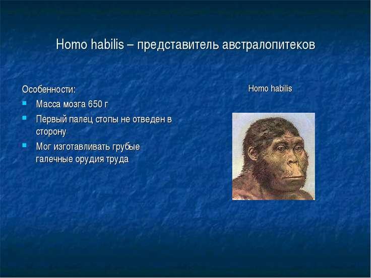 Homo habilis – представитель австралопитеков Особенности: Масса мозга 650 г П...