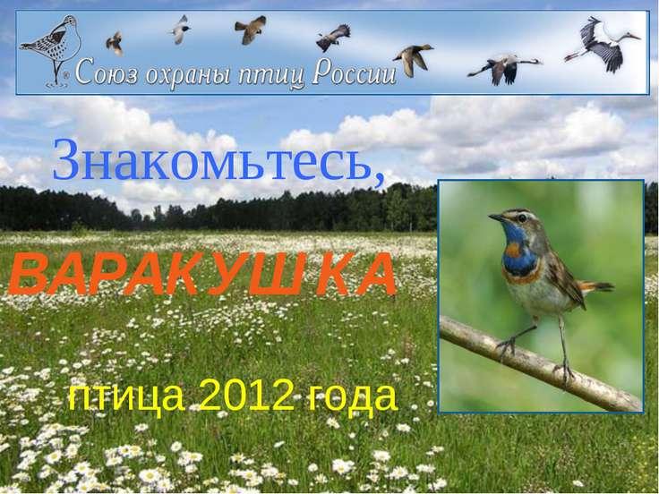 Знакомьтесь, ВАРАКУШКА птица 2012 года