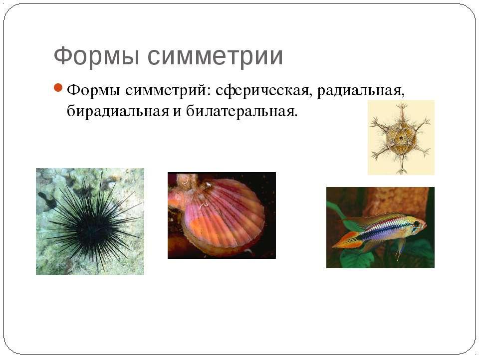 Формы симметрии Формы симметрий: сферическая, радиальная, бирадиальная и била...