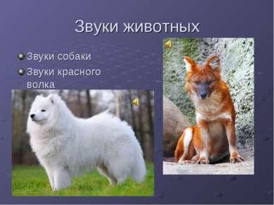Звуки животных Звуки собаки Звуки красного волка