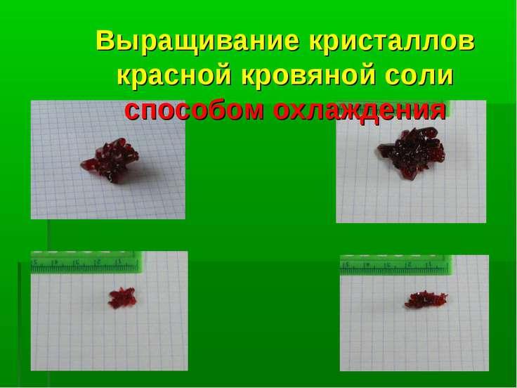 Выращивание кристаллов красной кровяной соли способом охлаждения