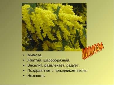 Мимоза. Жёлтая, шарообразная. Веселит, развлекает, радует. Поздравляет с праз...