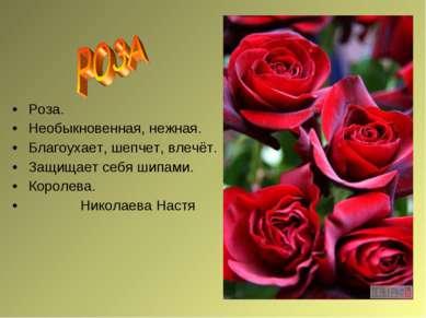 Роза. Необыкновенная, нежная. Благоухает, шепчет, влечёт. Защищает себя шипам...