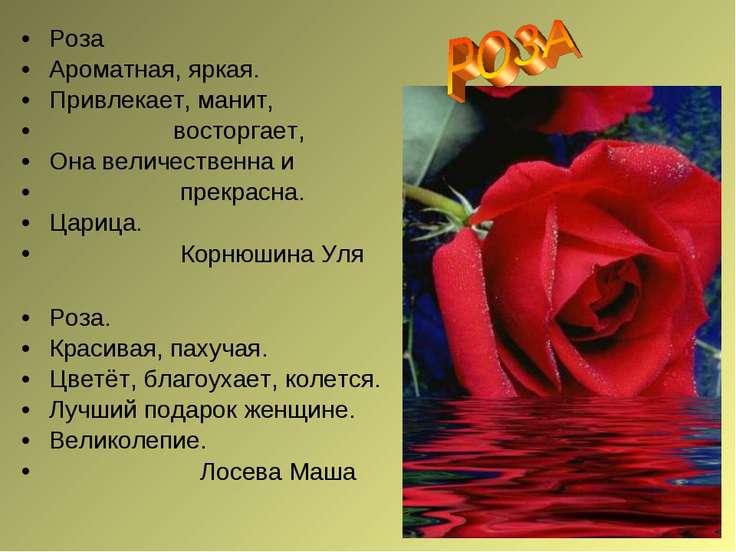 Роза Ароматная, яркая. Привлекает, манит, восторгает, Она величественна и пре...