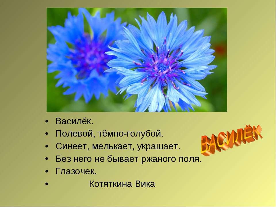 Василёк. Полевой, тёмно-голубой. Синеет, мелькает, украшает. Без него не быва...