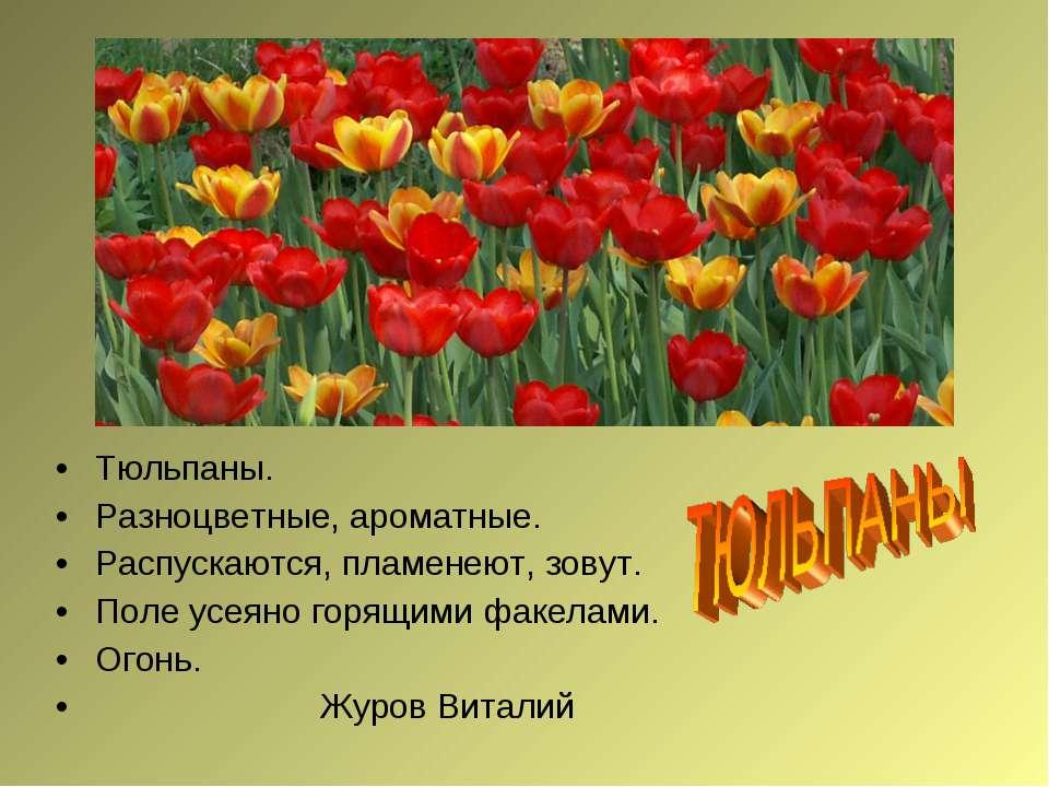 Тюльпаны. Разноцветные, ароматные. Распускаются, пламенеют, зовут. Поле усеян...