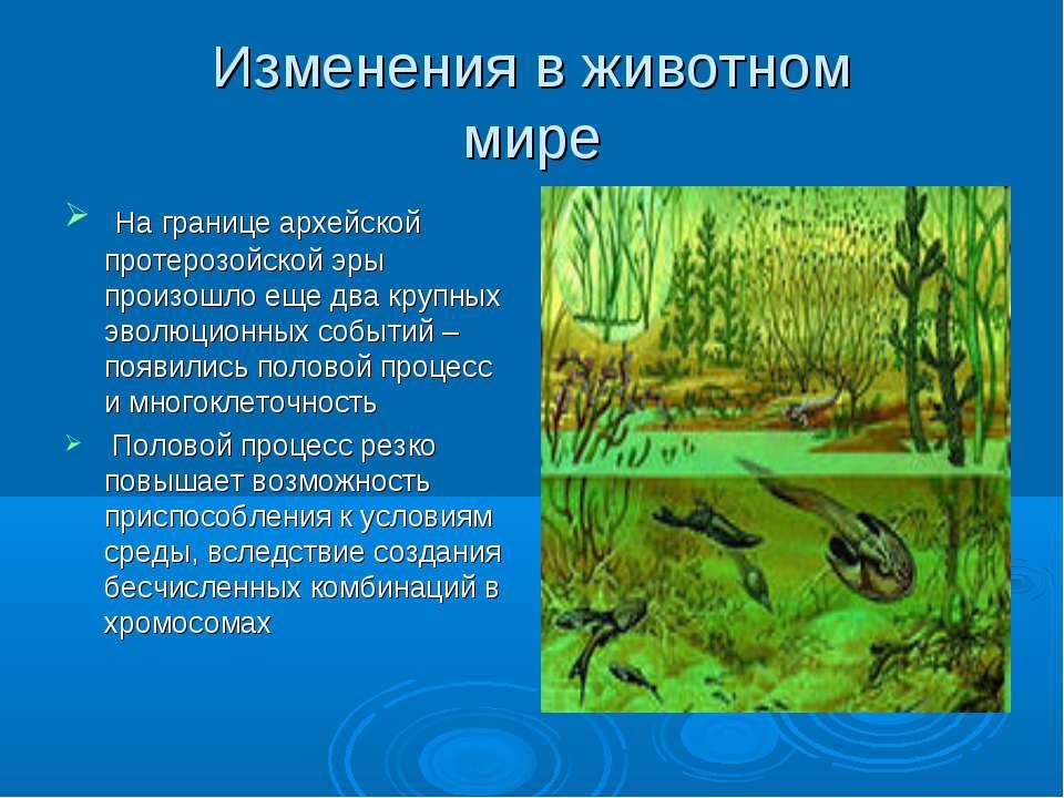 Изменения в животном мире На границе архейской протерозойской эры произошло е...