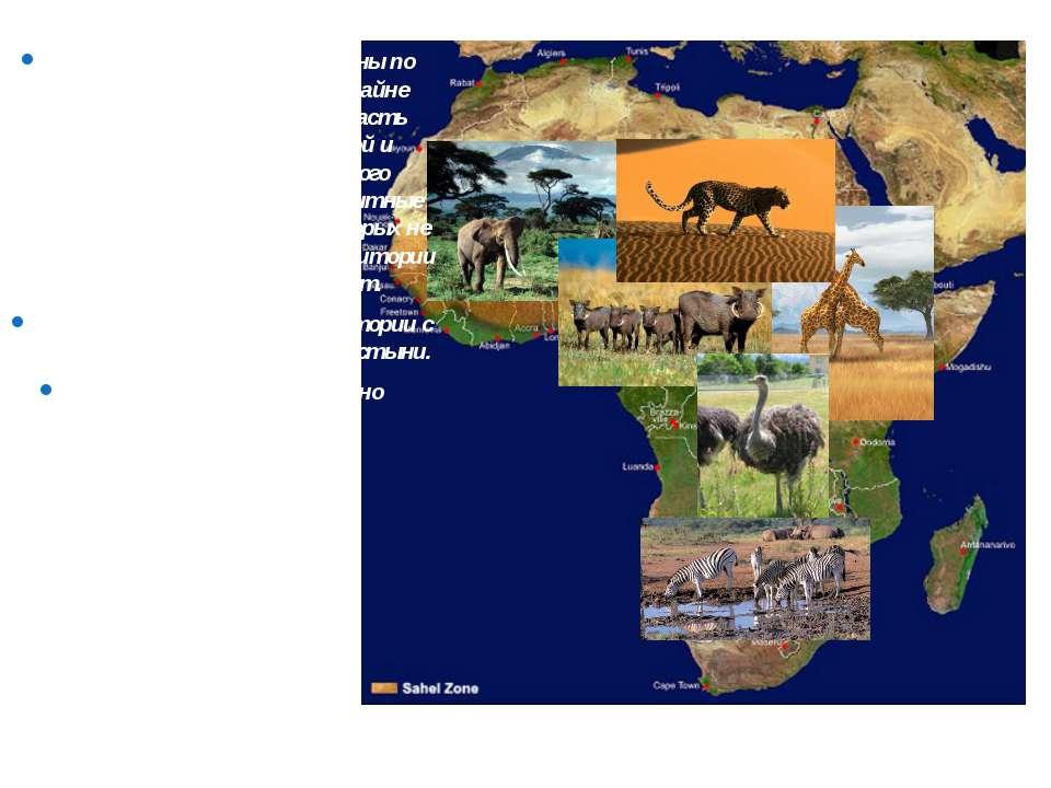 Внутренние воды распределены по территории континента крайне неравномерно: бо...