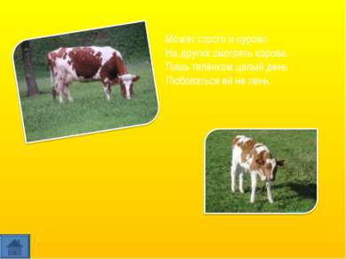 Может строго и сурово На других смотреть корова. Лишь телёнком целый день Люб...