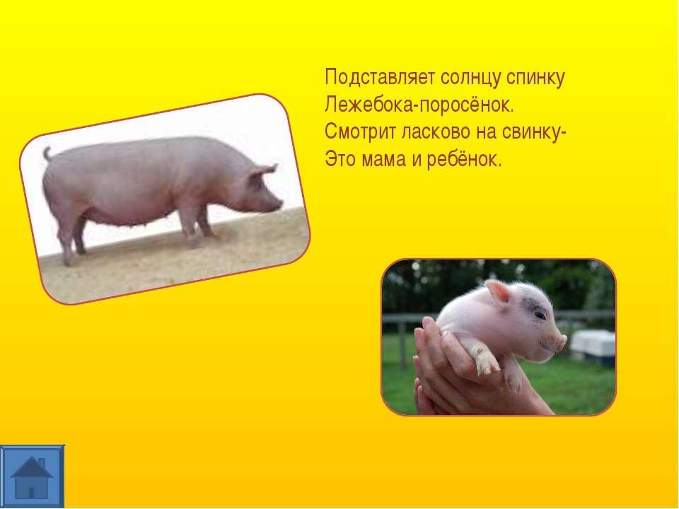 Подставляет солнцу спинку Лежебока-поросёнок. Смотрит ласково на свинку- Это ...