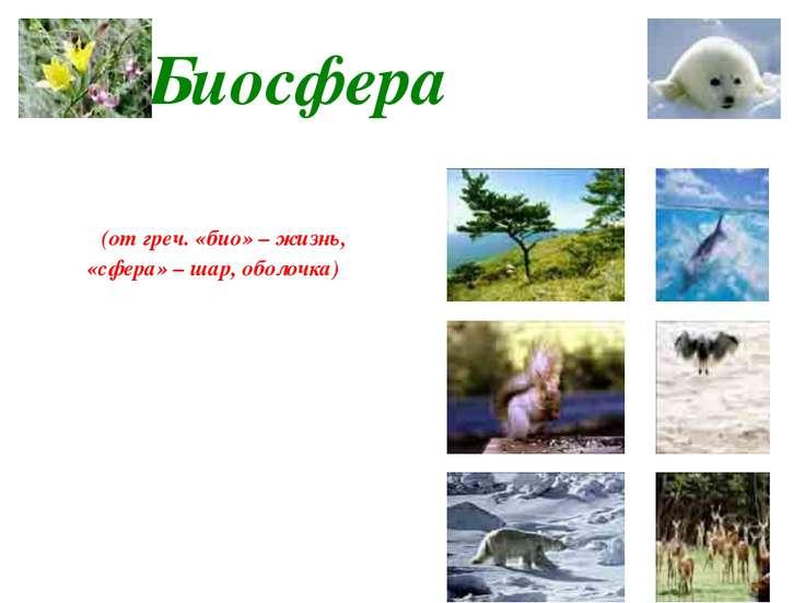 Биосфера Живая оболочка Земли, где распространена жизнь (от греч. «био» – жиз...