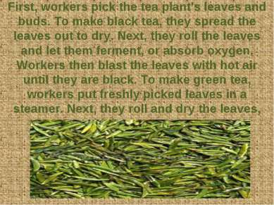 First, workers pick the tea plant's leaves and buds. To make black tea, they ...