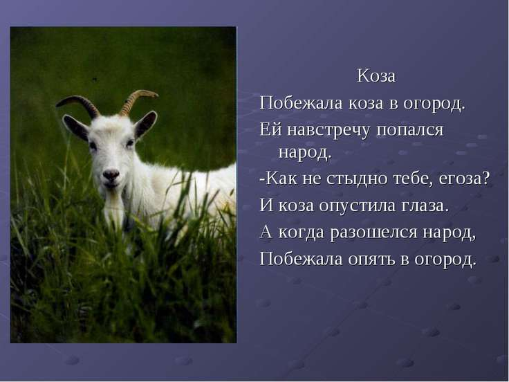 Коза Побежала коза в огород. Ей навстречу попался народ. -Как не стыдно тебе,...