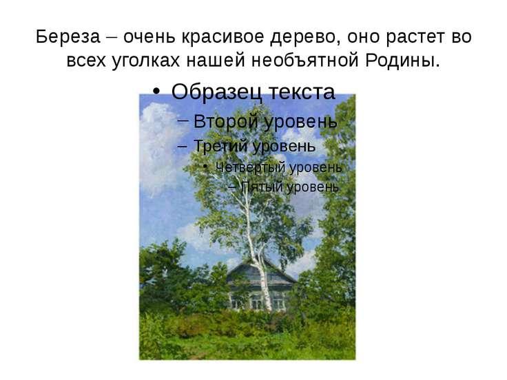 Береза – очень красивое дерево, оно растет во всех уголках нашей необъятной Р...
