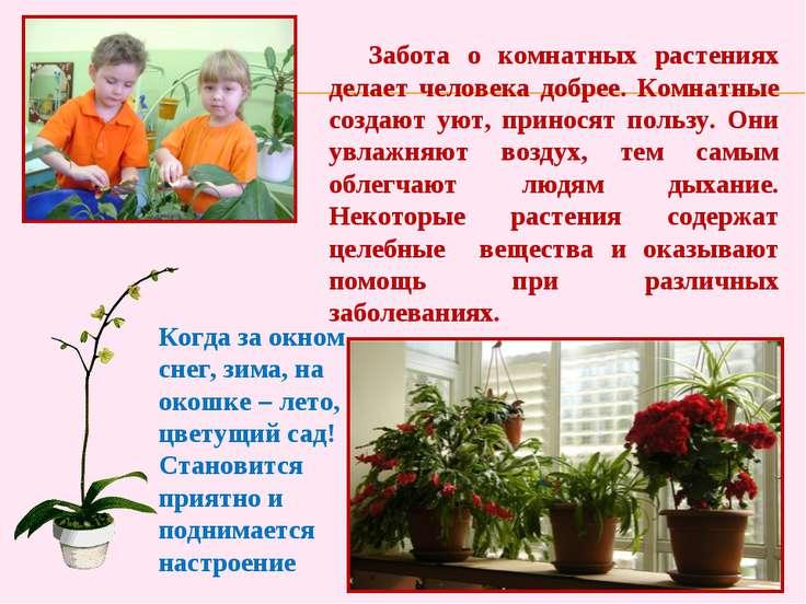 Забота о комнатных растениях делает человека добрее. Комнатные создают уют, п...