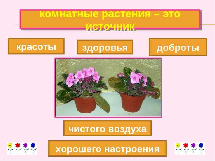 комнатные растения – это источник красоты хорошего настроения доброты чистого...