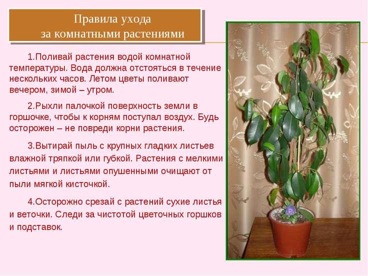 Правила ухода за комнатными растениями Поливай растения водой комнатной темпе...