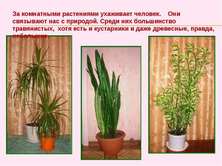 За комнатными растениями ухаживает человек. Они связывают нас с природой. Сре...