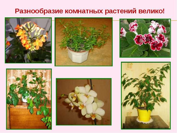 Разнообразие комнатных растений велико!