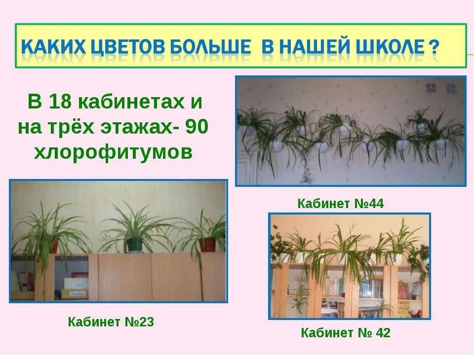Кабинет № 42 Кабинет №44 В 18 кабинетах и на трёх этажах- 90 хлорофитумов Каб...