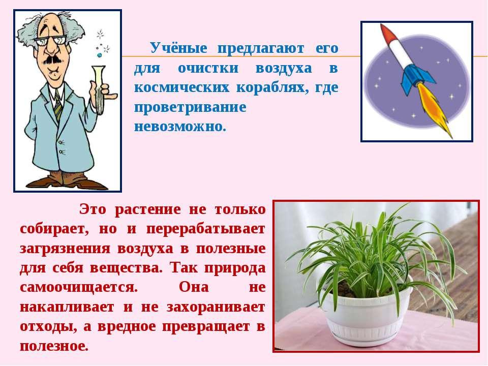 Это растение не только собирает, но и перерабатывает загрязнения воздуха в по...