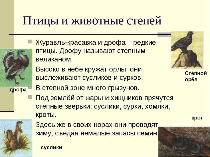 Птицы и животные степей Журавль-красавка и дрофа – редкие птицы. Дрофу называ...