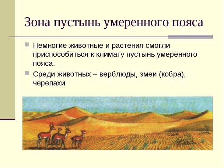 Зона пустынь умеренного пояса Немногие животные и растения смогли приспособит...