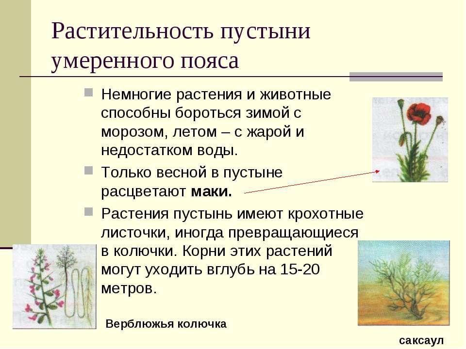Растительность пустыни умеренного пояса Немногие растения и животные способны...