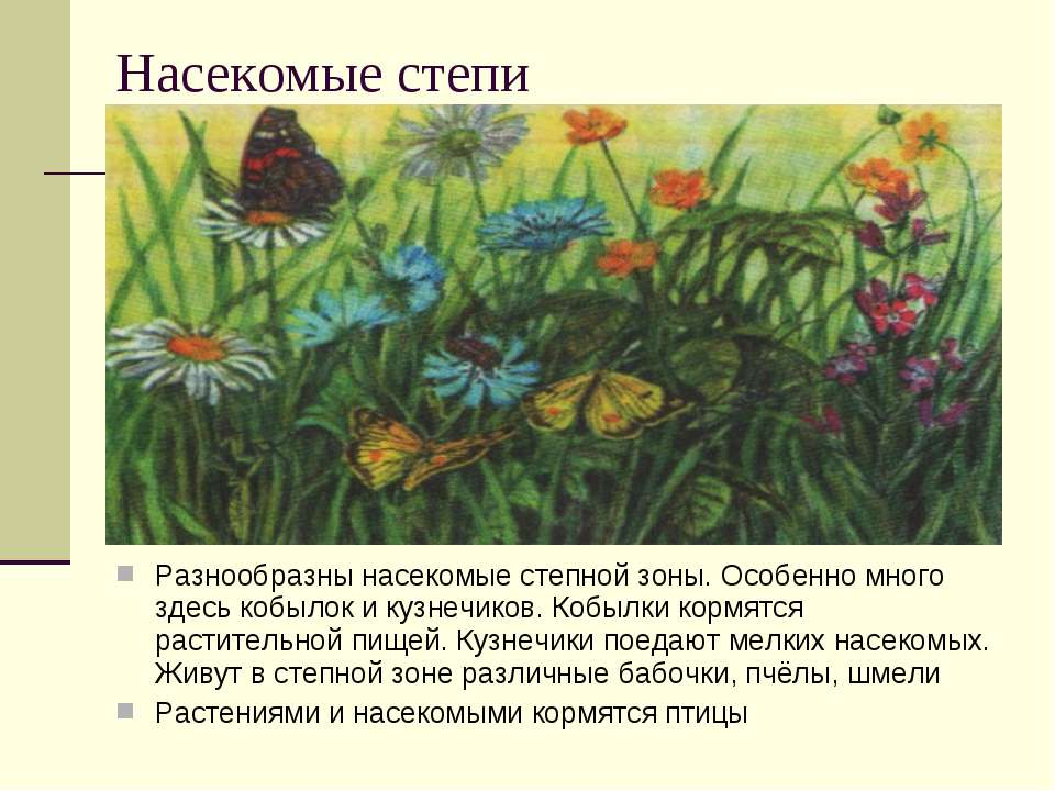 Насекомые степи Разнообразны насекомые степной зоны. Особенно много здесь коб...