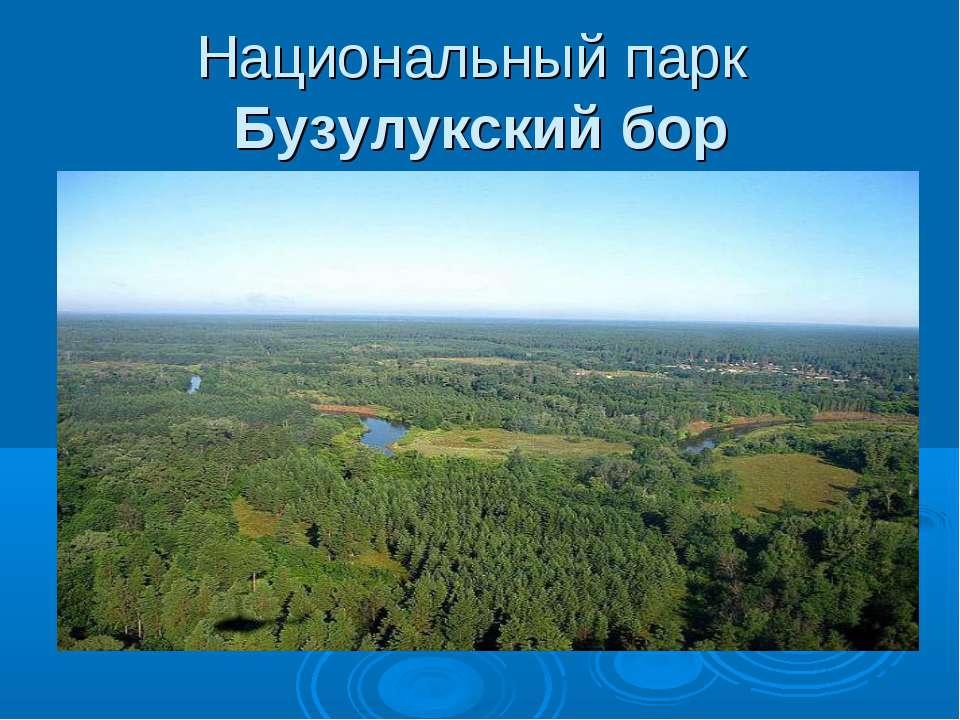 Национальный парк Бузулукский бор