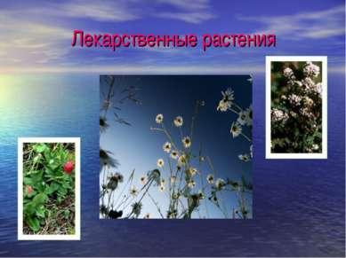 Лекарственные растения