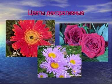 Цветы декоративные