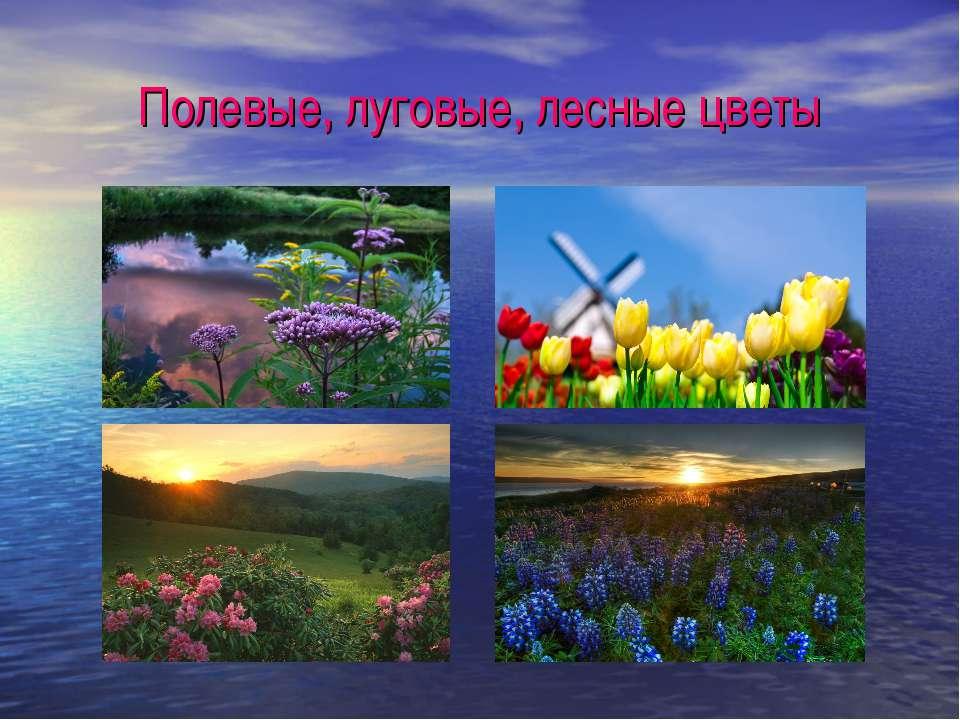 Полевые, луговые, лесные цветы