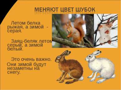 Летом белка рыжая, а зимой - серая. Заяц-беляк летом серый, а зимой белый. Эт...