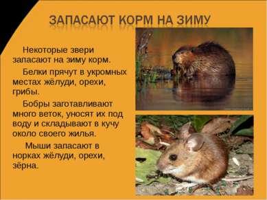 Некоторые звери запасают на зиму корм. Белки прячут в укромных местах жёлуди,...