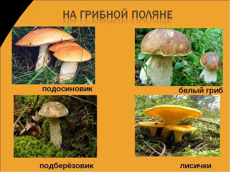 подосиновик подберёзовик белый гриб лисички